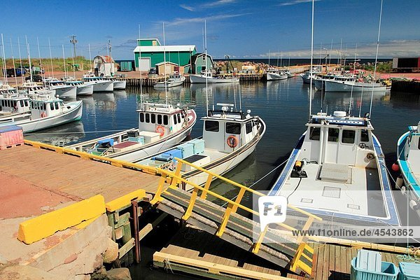 a marina with lobster boats at the Tignish Shore area of Prince Edward Island