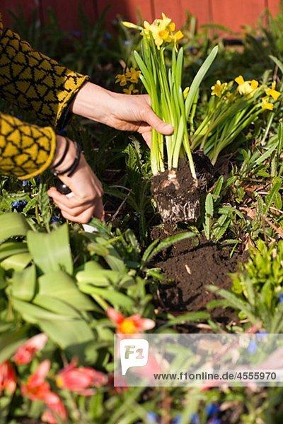 Frau Blume anpflanzen