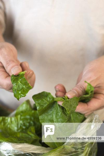 Vorbereitung von frischen Spinat