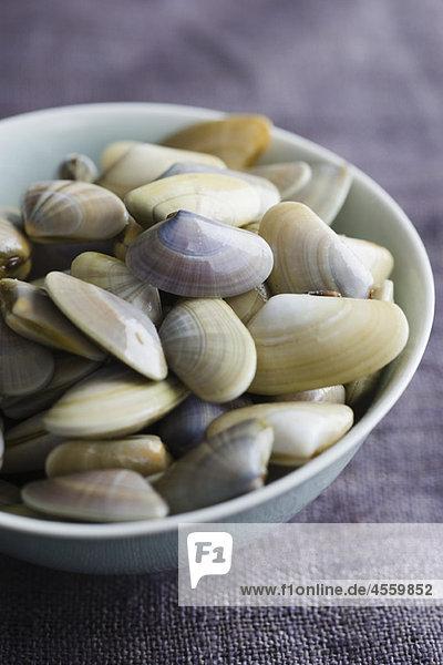 Schale mit frischen Muscheln