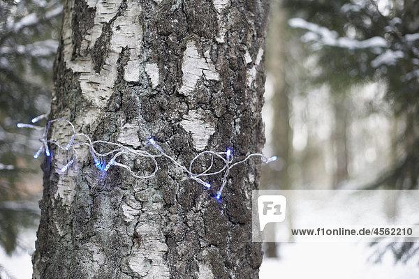 Winter Baum Verpackung Beleuchtung Licht Baumstamm Stamm Fee umwickelt