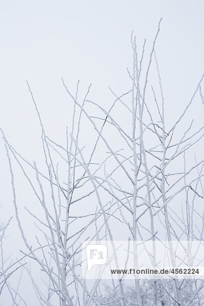 Frost abgedeckt Baum Zweige im winter