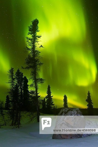 Aurora Borealis Northern Polar Lights over the boreal forest outside Yellowknife  Northwest Territories  Canada  MORE INFO The term aurora borealis was coined by Pierre Gassendi in 1621 from the Roman goddess of dawn  Aurora  and the Greek name for north