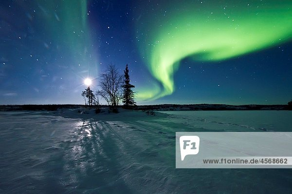 Aurora Borealis Northern Polar Lights and waxing moon over the boreal forest outside Yellowknife  Northwest Territories  Canada  MORE INFO The term aurora borealis was coined by Pierre Gassendi in 1621 from the Roman goddess of dawn  Aurora  and the Greek