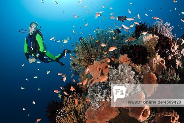 Coral Reef and Scuba Diver  Amed  Bali  Indonesia