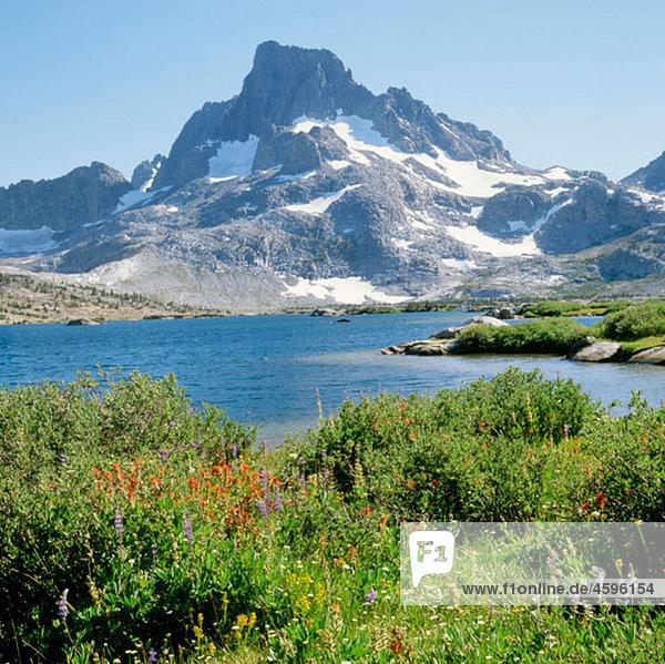 Wildflowers. Thousand Island Lake. Banner Peak. Ansel Adams Wilderness. Sierra Nevada Mountains. California. USA.
