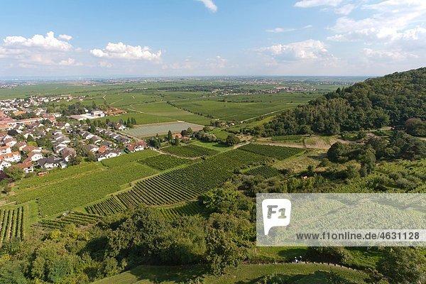 Deutschland  Rheinland-Pfalz  Pfalz  Wachenheim an der Weinstraße  Blick auf den Weinberg
