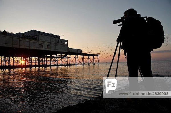 Professional Photographer Jerry Moore photographing starlings roosting at sunset Aberystwyth pier  west wales UK