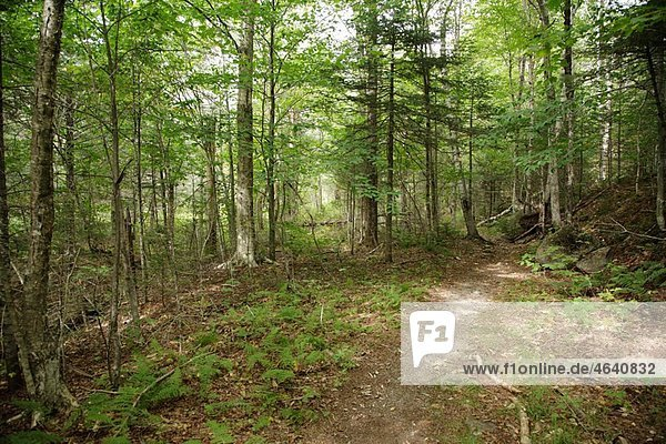 Pemigewasset Wilderness - Franconia Brook Trail in Franconia  New Hampshire USA during the summer months. This trail follows the old East Branch & Lincoln Logging Railroad that traveled through this area.