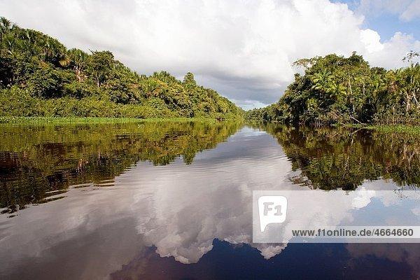 Landscape Photograph Of Orinoco Rivers Coastline Vegetation Blue Sky And White Clouds Reflected On The Mirror Like Rivers Calm Waters  DELTA DEL ORINOCO  GUAYANA  VENEZUELA