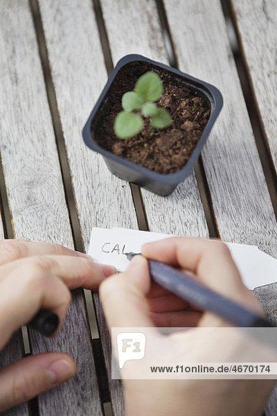 Handschriftliche Notiz für die Pflanze