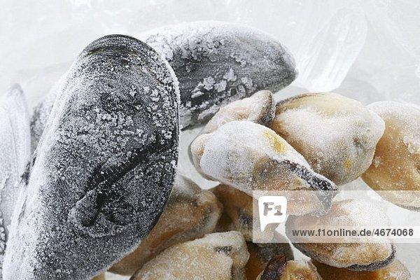 Gefrorene Pfahlmuscheln auf Eis