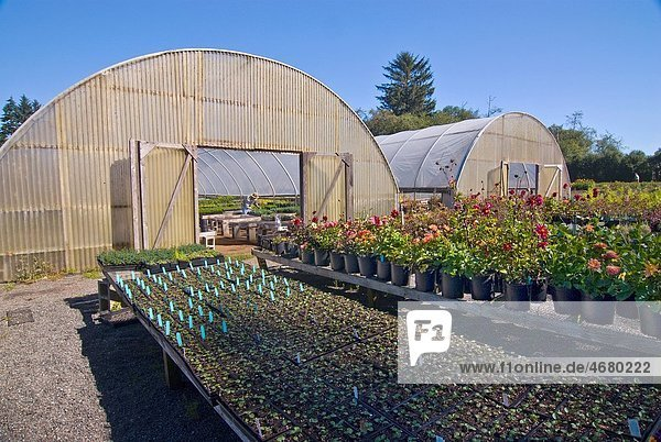 Greenhouse on organic flower farm  Humboldt County  California