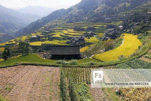 Terraces  Rice fields  Leigong Shan Nature Reserve  Montes Leigong  Guizhou  China