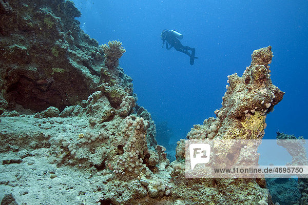 Taucher an einem Riff  Marsa Alam  ƒgypten  Rotes Meer  Afrika