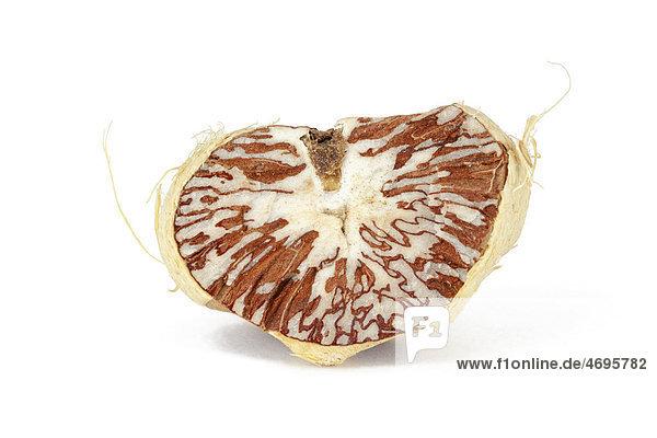 Betelnuss oder Arekanuss (Areca catechu)