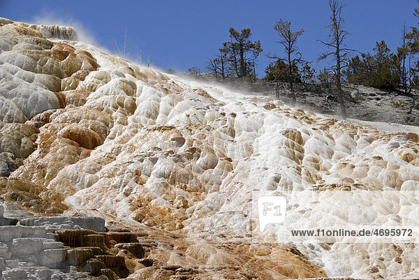 Mammoth Hot Spring Terraces  Yellowstone Nationalpark  Wyoming  USA
