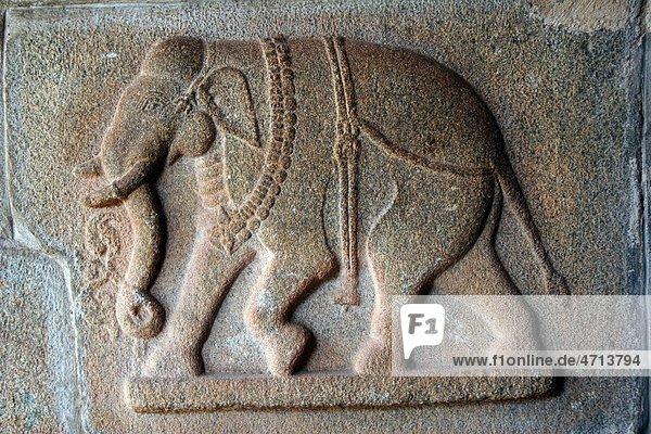 Carved sculpture elephant on pillar of Hajara Rama temple   Hampi Vijayanagar ruins   Karnataka   India Carved sculpture elephant on pillar of Hajara Rama temple , Hampi Vijayanagar ruins , Karnataka , India