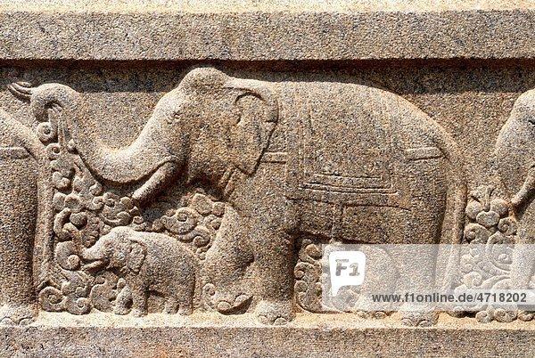 Elephant walking with calf relief stone carving on wall of Swami Vivekananda Rock Memorial Mandapam   Kanyakumari   Tamil Nadu   India Elephant walking with calf relief stone carving on wall of Swami Vivekananda Rock Memorial Mandapam , Kanyakumari , Tamil Nadu , India
