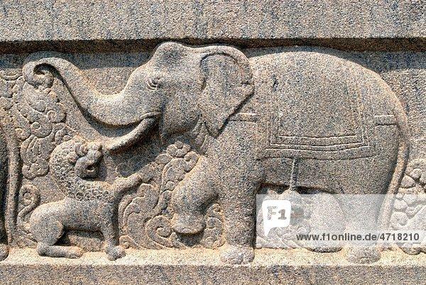 Elephant fighting with Lion relief stone carving on wall of Swami Vivekananda Rock Memorial Mandapam   Kanyakumari   Tamil Nadu   India Elephant fighting with Lion relief stone carving on wall of Swami Vivekananda Rock Memorial Mandapam , Kanyakumari , Tamil Nadu , India