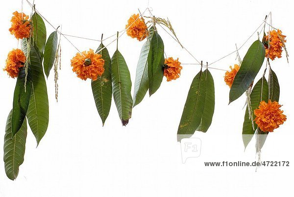 Marigold and Mango leaves garland for prayer on Indian Dussera dusera Festival