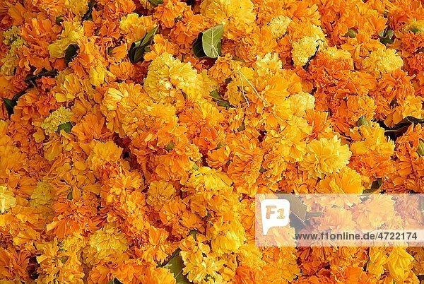 Marigold flowers and garlands for sale on Dussera dusera Festival   Aurangabad  Maharashtra   India
