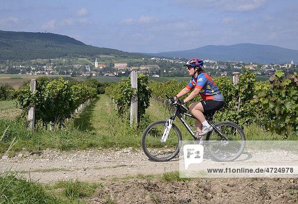 Weingartenweg am Veitinger Gebirge  Triestingtal  Niederösterreich  Österreich  Europa