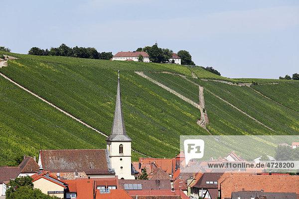 Escherndorf mit Vogelsburg nahe Volkach  Mainschleife  Mainfranken  Unterfranken  Franken  Bayern  Deutschland  Europa