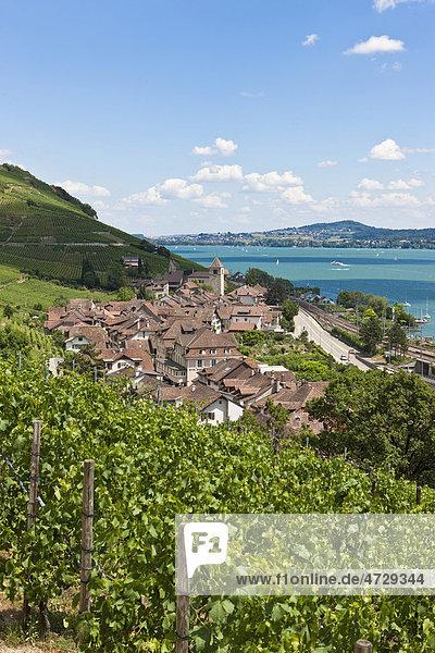 Blick über die Weinberge auf die Ortschaft Twann  Bieler See  Kanton Bern  Schweiz  Europa