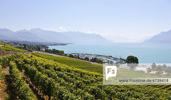 View across the vineyards to Vevey  Lake Geneva at back  Vevey  Canon Vaud  Lake Geneva  Switzerland  Europe
