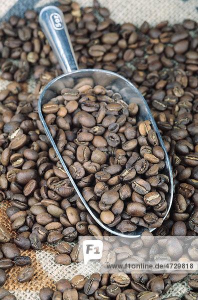 Kaffeebohnen in einer Schaufel
