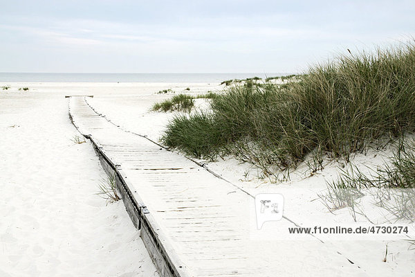 Strand bei Dueodde  Bornholm  Dänemark  Europa
