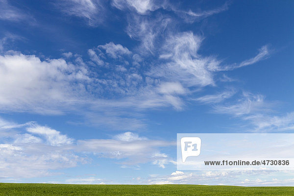 Green grass and sky with clouds
