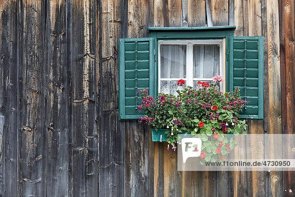 Traditionelles Holzhaus  Almhütte  mit grünem Fenster und Geranien  Salzkammergut  Österreich  Europa Traditionelles Holzhaus, Almhütte, mit grünem Fenster und Geranien, Salzkammergut, Österreich, Europa