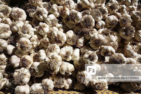 Knoblauchknollen auf einem Wochenmarkt in der Provence  Frankreich  Europa