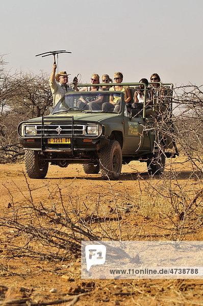 Ortung von Geparden mit Sendehalsband mit einer Antenne auf dem Gelände der Gästefarm Okonjima  Namibia  Afrika