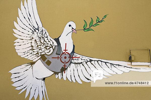 Kunstwerk vom Street-Art-Künstler Banksy  Taube mit kugelsicherer Weste  Bethlehem  Palästina  Vorderasien