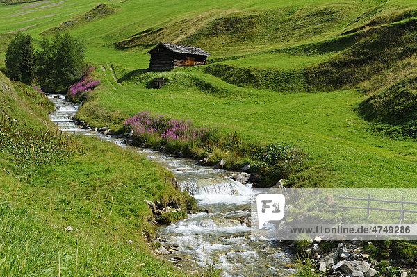 Fanealm  Fane Alm  am Valser Bach  Valsertal  Pustertal  Pfunderer Berge  Südtirol  Italien  Europa