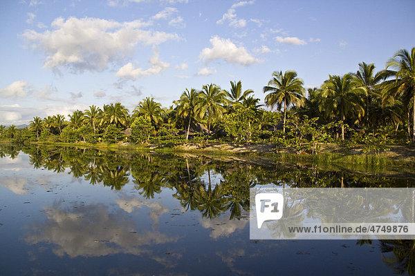 Coconut plantation near Fort Dauphin  Madagascar  Africa