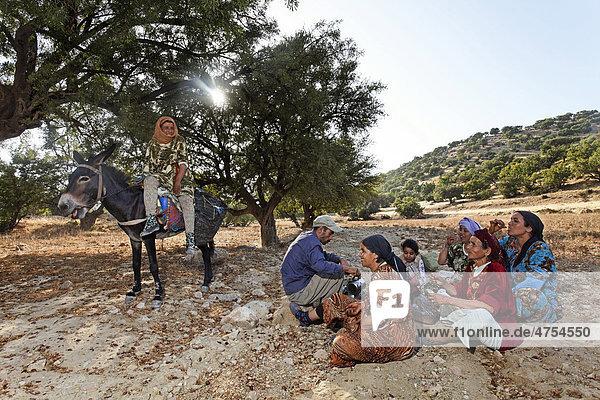 Nach dem Aufsammeln von Argannüssen (Argania spinosa) für die Herstellung von Arganöl macht eine Familie Pause bei Essaouira  Marokko  Afrika