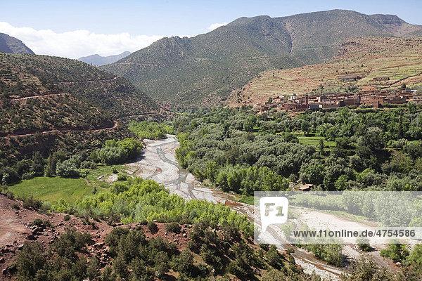 Tal des Flusses Oued Zad in der Nähel von Tighoudine  Schwertlilien-Anbau (Iris germanica)  Region Ait Inzel Gebel  Atlas Gebirge  Marokko  Afrika
