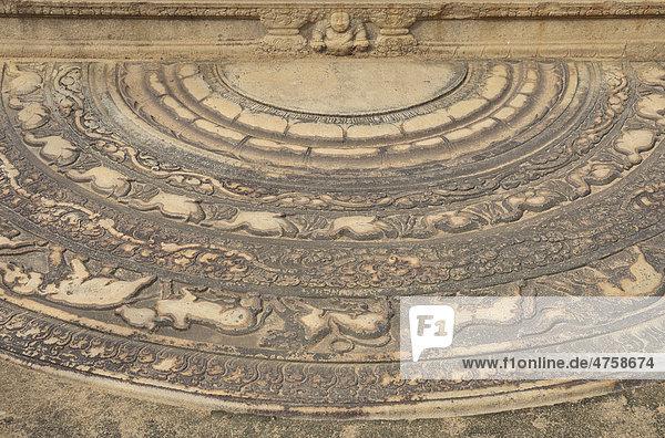 Mondstein vor den mit Reliefs verzierten Treppenstufen im Mahasena-Palais  Pancavasa  Anuradhapura  Unesco Weltkulturerbe  Sri Lanka  Ceylon  Südasien  Asien
