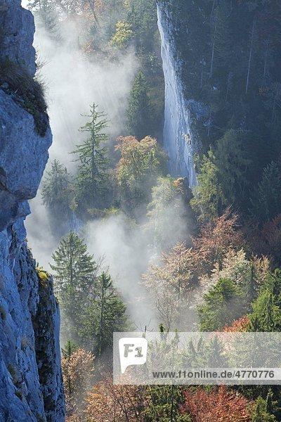 Herbstlicher Wald an den Barmsteinen  Berchtesgadener Alpen