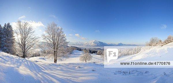 Blick zu den Berchtesgadener Alpen mit Watzmann und Untersberg  Salzburger Land  Österreich