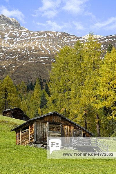 Alte Holzhütte  Herbstbäume im Gsieser Tal  St. Magdalena  Südtirol  Italien  Europa