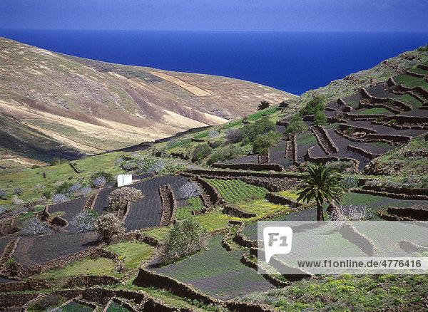 Terrassenlandwirtschaft  Tal von Tabayesco  Lanzarote  Kanarische Inseln  Spanien  Europa