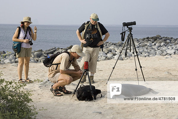 Gal·pagos-Seelöwe (Zalophus wollebaeki) mit Touristen  Galapagos-Inseln  Pazifik