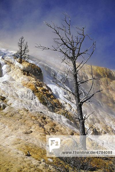 Devil's Thumb  Teufelsdaumen  Palette Spring Terrace  Lower Terraces  Kalkstein-Sinterterrassen  Geysire  heiße Quellen  farbige thermophile Bakterien  Mikroorganismen  versteinerte Bäume  Mammoth Hot Springs Terraces  Yellowstone National Park  Nationalpark  Wyoming  Vereinigte Staaten von Amerika  USA