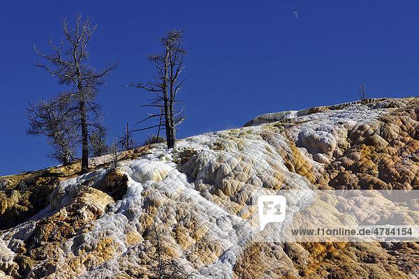 Palette Spring Terrace  Lower Terraces  Kalkstein-Sinterterrassen  heiße Quellen  farbige thermophile Bakterien  Mikroorganismen  abgestorbene Bäume  Mammoth Hot Springs Terraces  Yellowstone-Nationalpark  Wyoming  Vereinigte Staaten von Amerika  USA