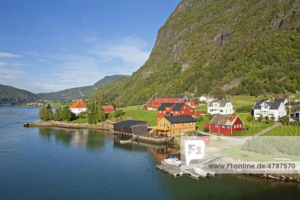 Bunte Holzhäuser am Sognefjord in Sogndal  Norwegen  Skandinavien  Europa Holzhäuser